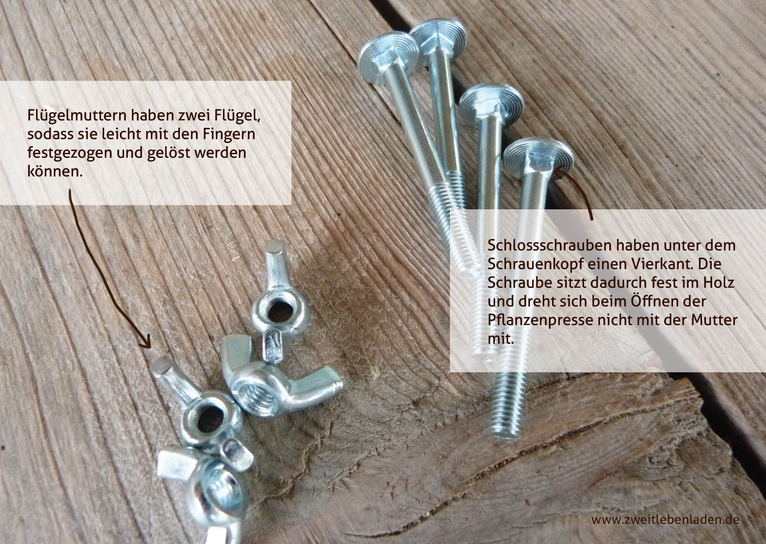 Herbarium - Pflanzenpresse - Flügelmuttern und Schlossschrauben