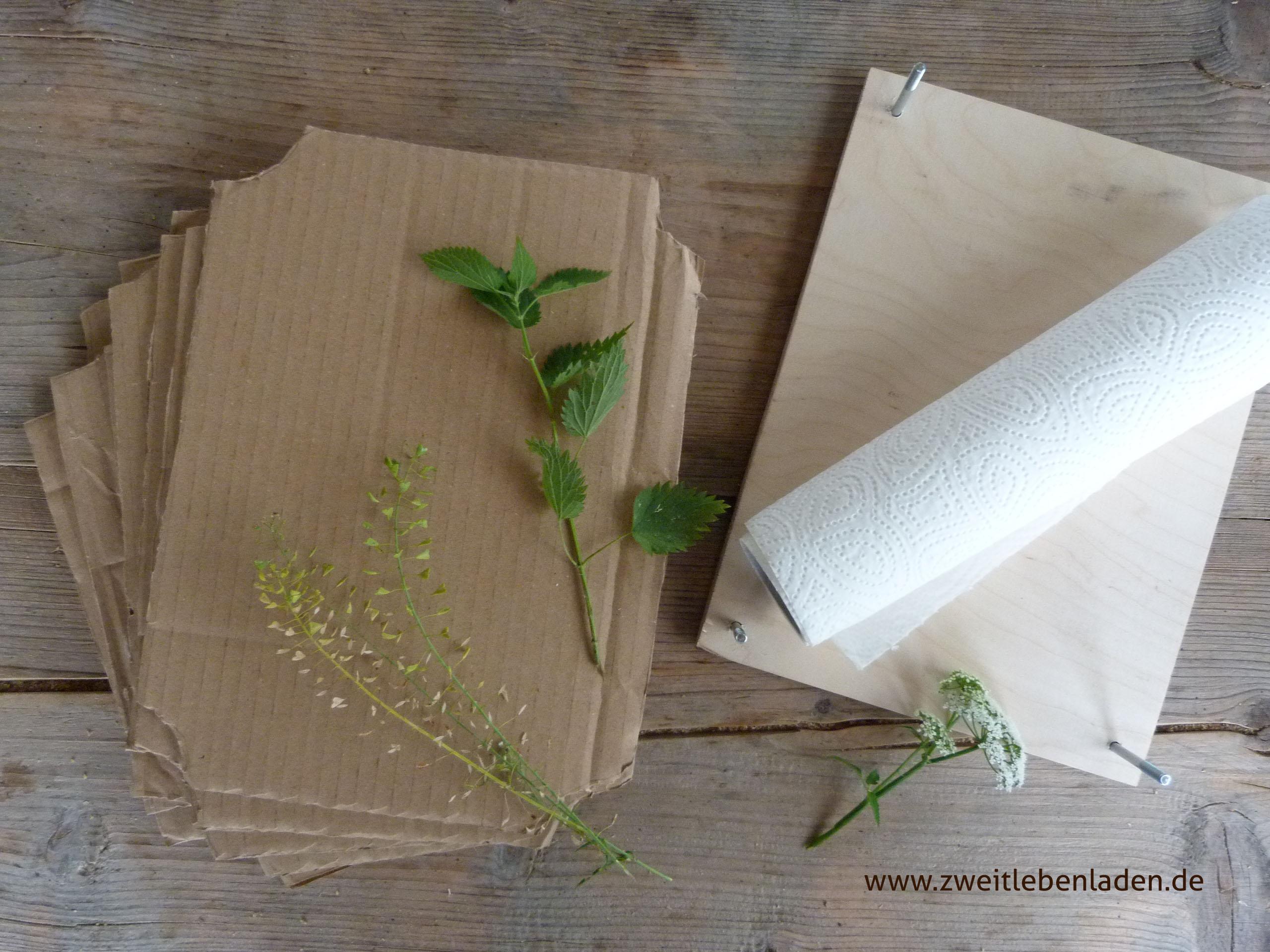 Herbarium - eine Pflanzenpresse bauen