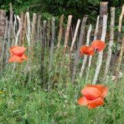 Gartenzaun - Staketenzaun