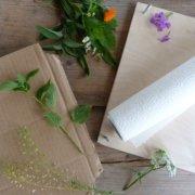 Herbarium - Pflanzenpresse